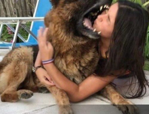 Joven realizó sesión fotográfica con su mascota y está le desfiguró la cara