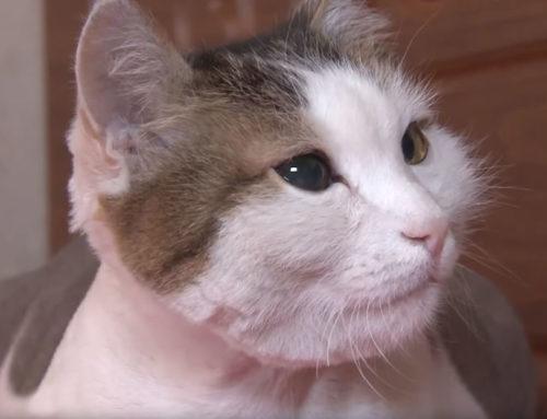 Amor Felino: Gatito salva a su dueña de morir en un incendio mientras dormía