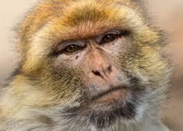 Mono alcohólico pasará el resto de su vida enjaulado por matar a niña de 6 años
