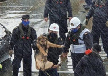Noticias Chile | Armada rescató perrito del Mar y lo adoptó como nuevo miembro de la institución