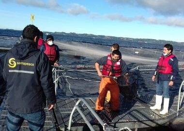 Noticias Chile   Se fugaron miles de salmones desde jaulas de cultivo en el lago Llanquihue