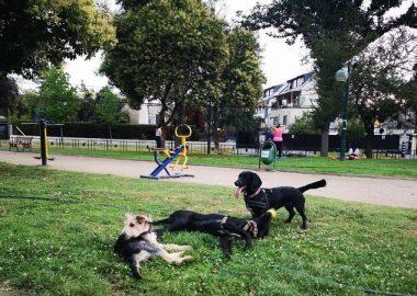 Noticias Chile | Ñuñoa es la comuna que pide más permisos para sacar perros en la RM