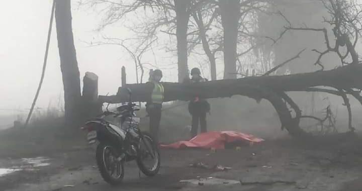 Noticias Chile | Joven trabajador muere luego de impactar barricada de árboles en La Araucanía