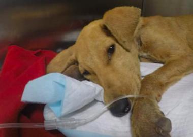 Noticias Chile | Cachorro muere por abuso sexual en Arica | INFORMADORCHILE