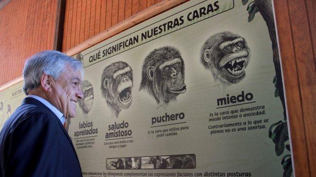 Noticias Chile | Zoológico Metropolitano vuelve abrir sus puertas al público