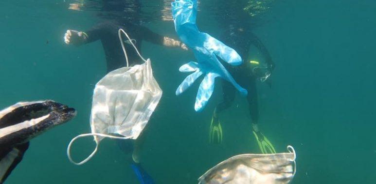Noticias Chile | Pingüino muere luego de comer mascarilla N-95 | INFORMADORCHILE
