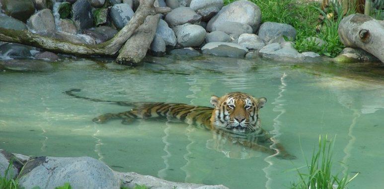 Noticias Chile   Buin Zoo vuelve abrir luego de seis meses en cuarentena total