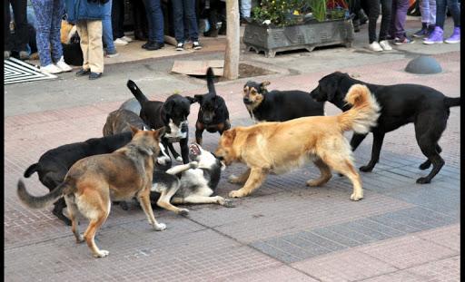 Noticias Chile | Perro atacó a familia completa y dueño tuvo que matarlo