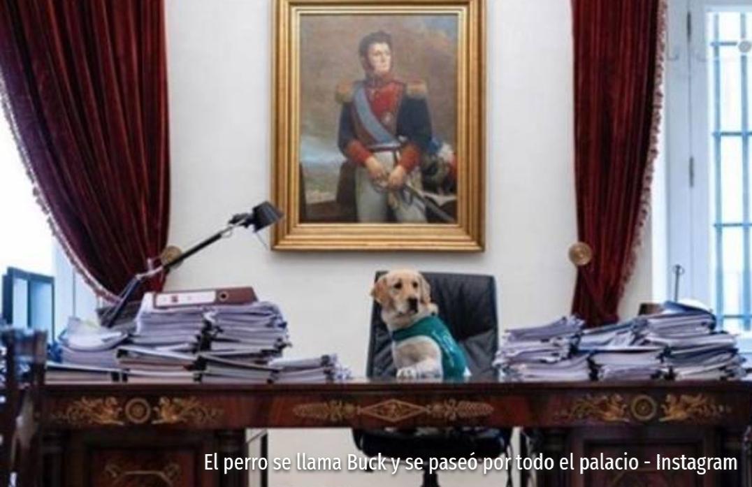 Noticias Chile | Perrito trató de tomar el puesto del presidente en La Moneda