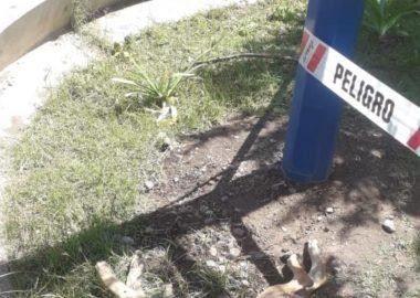 Noticias Chile | Perrito muere electrocutado al tocar poste de alumbrado en Parque Quinta Normal