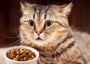 Noticias Chile | Usuarios de redes sociales acusan a Master Cat, que alimento está dañando la salud de sus gatos