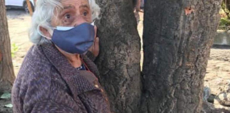 Noticias Chile | Mujer de 80 años se aferró a un árbol para evitar su tala, todo esto por mejoras en pavimentación en el sur del país